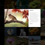quiescent-popup-slideshow